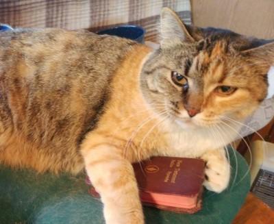 Cats that preach